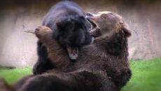 Meksykanie czekają na romans rosyjskich niedźwiedzi