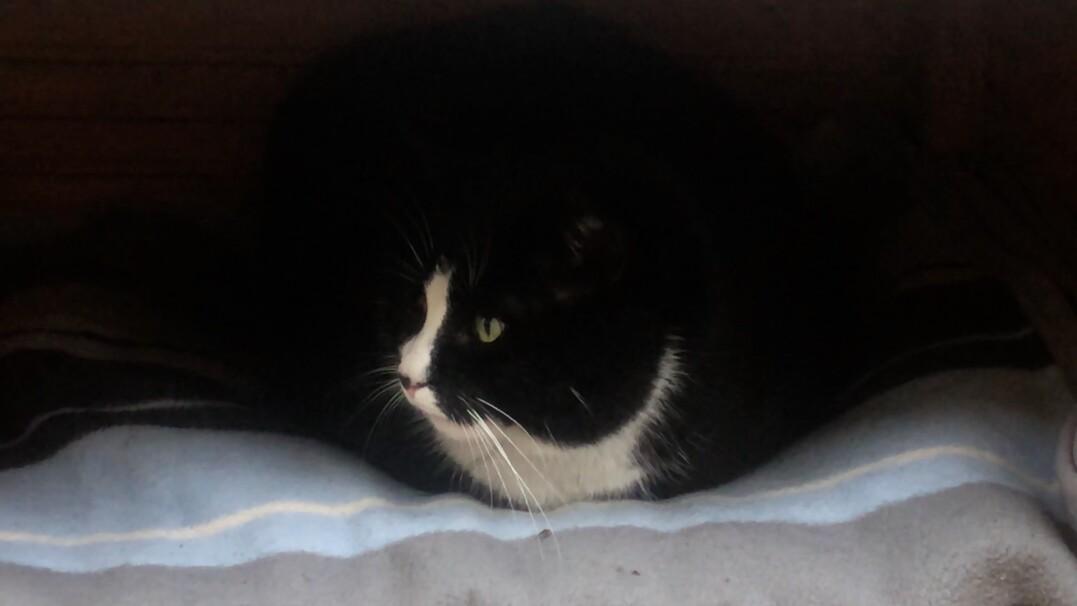 Ten kot jest szczecińskim celebrytą
