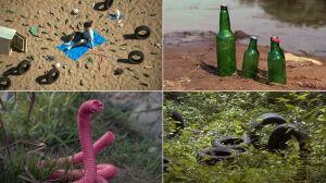 Nowe gatunki w nadwiślańskiej dżungli. Czyta Krystyna Czubówna