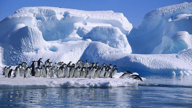 Olbrzymia góra lodowa zabiła 150 tysięcy pingwinów na Antarktydzie