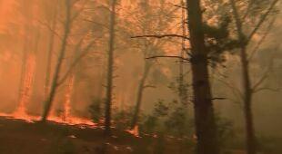 Ogień w Nowej Południowej Walii obejmuje większy teren niż cały obszar Sydney
